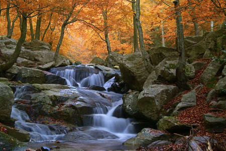 Waterfall in the natural par