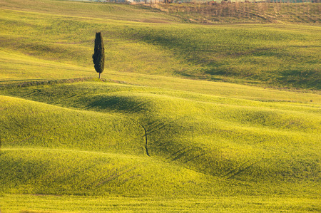 Spring field painted Tuscan sunset light.