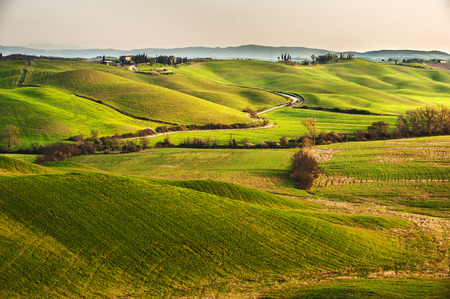 The road between green fields in the Tuscan landscape