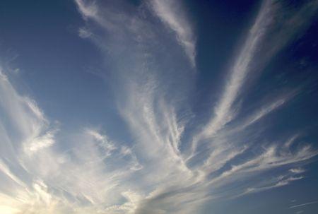 Branching clouds