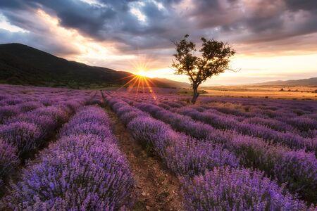 Photo pour Stunning view with a beautiful lavender field at sunrise - image libre de droit