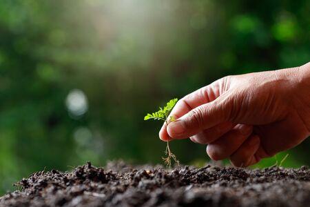 Photo pour Farmer hand planting sprout (tamarind tree) in fertile soil. - image libre de droit