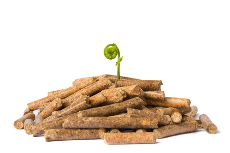 Young tree growing out of wood pellets on white background