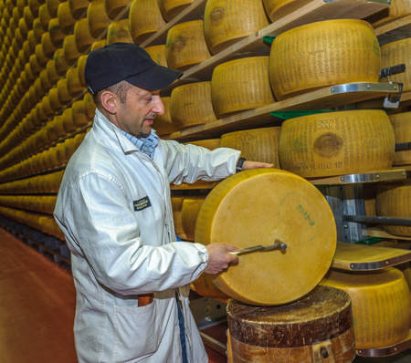 PARMA, ITALY - March, 10, 2014: Parmesan cheese quality test by battitore, master grader