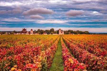Photo pour Vineyards in the autumn season, Burgundy, France - image libre de droit