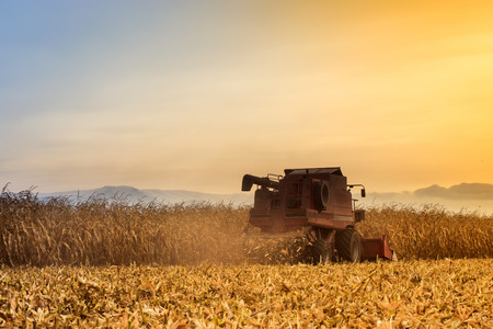 Red harvester working on corn field at sunset. Vintage effect.