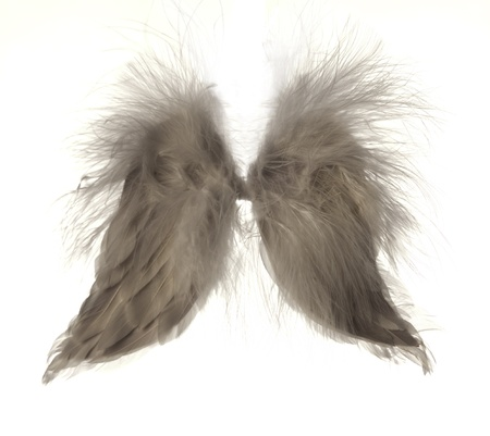 still life image of angle wings