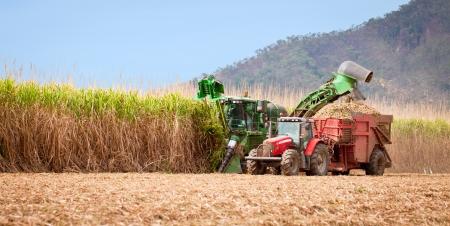 Foto für Sugar cane harvest in tropical Queensland, Australia - Lizenzfreies Bild