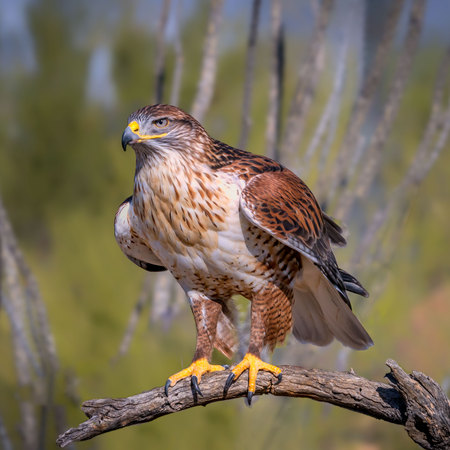 Foto de Ferruginous Hawk on branch in Sonoran Desert - Imagen libre de derechos
