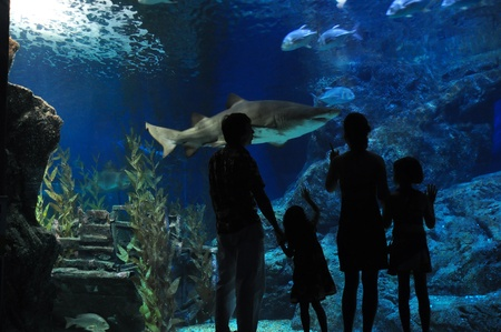 Family with two kids looking at shark in oceanarium