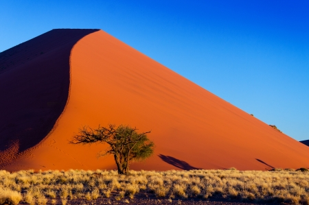 African landscape, beautiful sunset dunes and nature of Namib desert, Sossusvlei, Namibia, South Africa