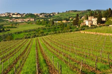 Chianti Landscape