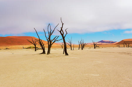 Trees and landscape of Dead Vlei desert in Namibia, South Africa