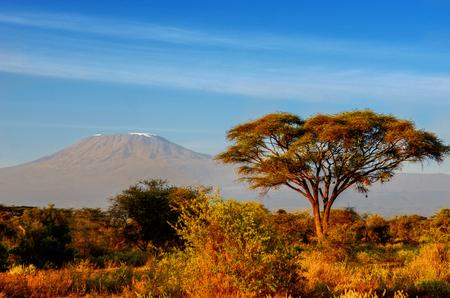 Beautiful Kilimanjaro mountain after sunrise in morning, Kenya,Amboseli national park, Africa