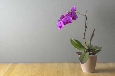 Pink orchid on a table