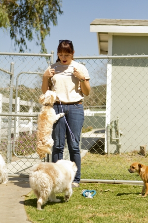 A kennel worker plays with several small dogs