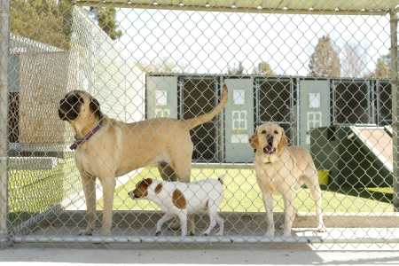 Large and small dogs in a pet boarding facility