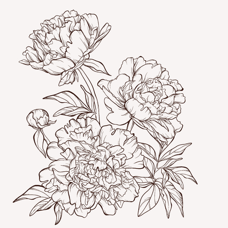Illustration for Blossoming peony flowers on white. - Royalty Free Image