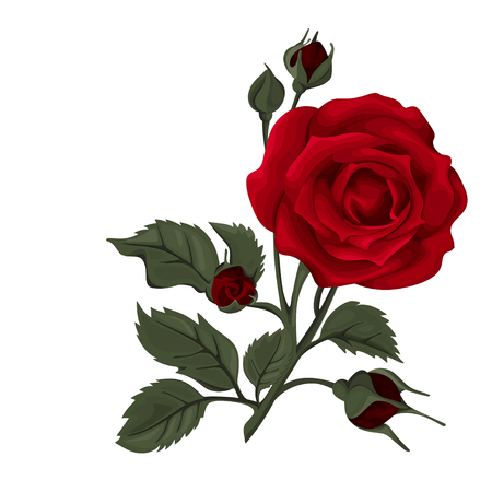 Illustration for Beautiful rose isolated on white. Red rose. Perfect for background greeting cards and invitations of the wedding, birthday, Valentine's Day, Mother's Day. - Royalty Free Image