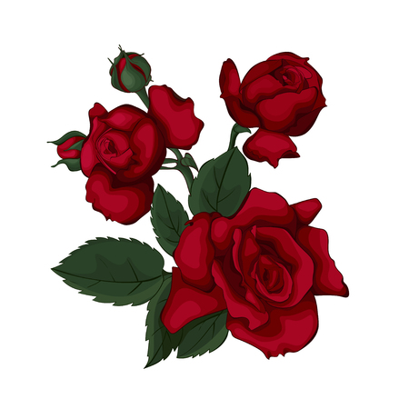 Illustration for Roses isolated on white beautiful. Red rose. Perfect for background greeting cards and invitations of the wedding, birthday, Valentine's Day, Mother's Day. - Royalty Free Image