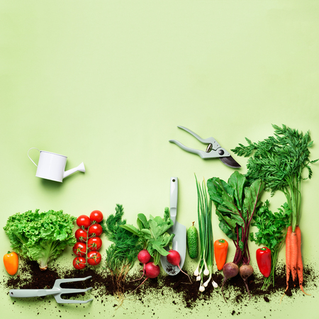 Photo pour Organic vegetables and garden tools on green background with copy space. Square crop. Top view of carrot, beet, pepper, radish, dill, parsley, tomato, lettuce. Vegan, eco concept - image libre de droit