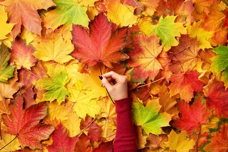 Photo pour Maple leaf in girl hands. Abstract autumn background. Copy space for advertising. Sunny day, warm weather, autumn concept. Top view. Banner. - image libre de droit