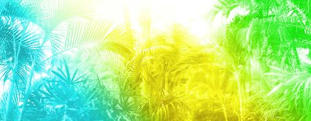 Photo pour Tropical palm leaves with sun leaks effect. Floral pattern in trendy rainbow gradient background. Banner, copy space. Exotic palms bokeh, toned in neon colors. Summer, holiday and travel concept. - image libre de droit