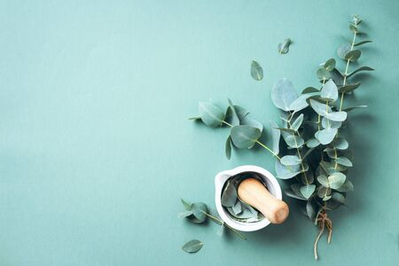 Photo for Eucalyptus leaves and white mortar, pestle. Ingredients for alternative medicine and natural cosmetics. Beauty, spa concept. - Royalty Free Image