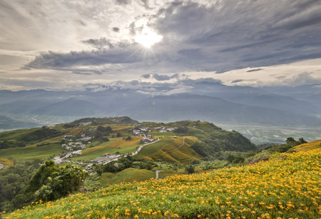 The beautiful Lily flower mountain of eastern Taiwan