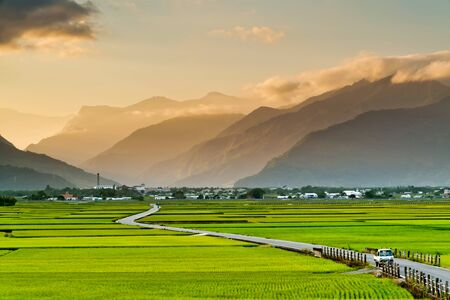 Foto per Landscape View Of Rice Fields At Chishang, Taitung, Taiwan. - Immagine Royalty Free