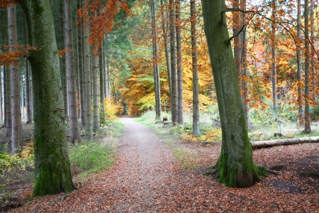 Peaceful Autumn Forest Path
