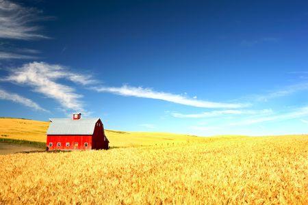 Foto de Red Barn in the mist of a wheat field under a puffy cloud blue sky - Imagen libre de derechos
