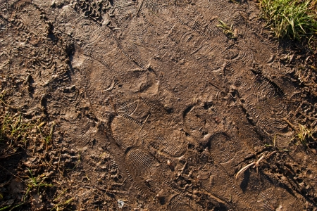 footsteps and traces in wet brown mud