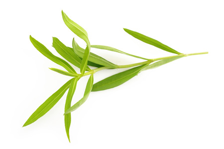 tarragon twig fragment isolated on white background