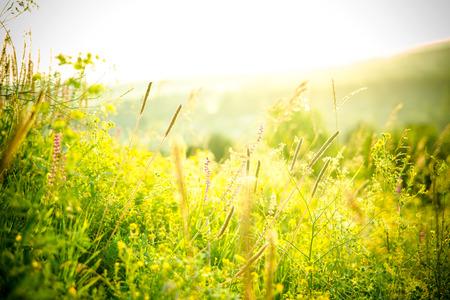 Photo pour Beautiful rural landscape with sunrise over a meadow. Soft focus - image libre de droit