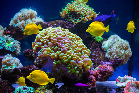 Tropical fish butterfly and corals. Beautiful background of the underwater world