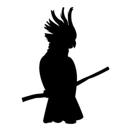Ilustración de cockatoo tropical bird icon image vector illustration design  black silhouette - Imagen libre de derechos