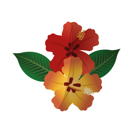 Tropical flower icon over white background.