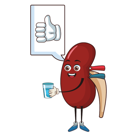 Illustration pour Kidney thumb up drinking water funny cartoon vector illustration graphic design - image libre de droit