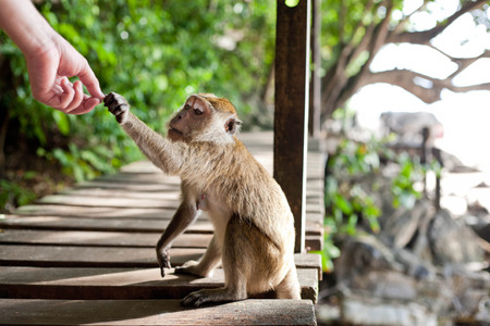 monkey taking food from human's hand