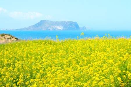 Photo pour It is spring scenery of tourist spot Seopjikoji in Seogwipo of Jeju Island. - image libre de droit