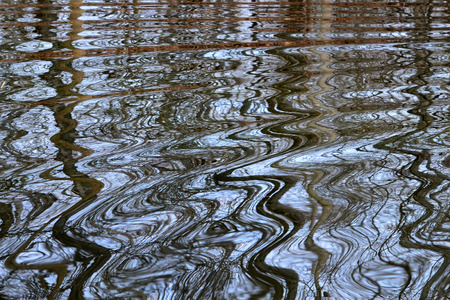 Pond ripples reflect trees on a nearby shore