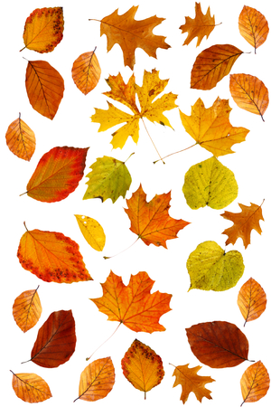Photo for different autumn color leaves - Royalty Free Image