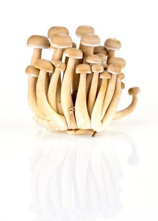 fresh shimeji mushroom on white background