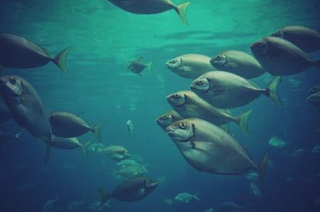 Photo pour School of Fish - image libre de droit