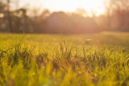 Photo pour Green grass in the countryside - image libre de droit