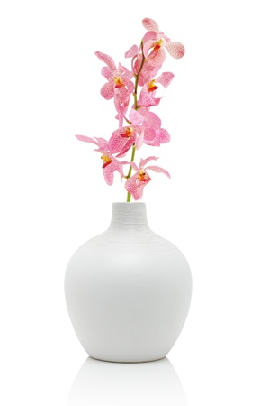 Pink orchid in white vase, isolated on white