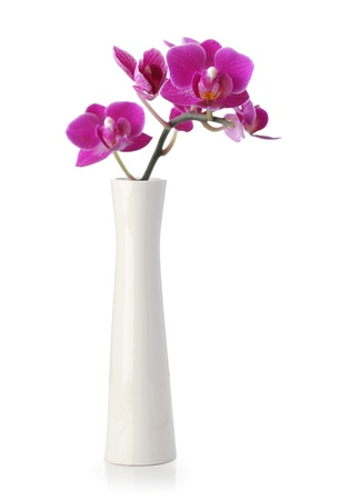 Pink Orchid flower in white vase isolated on white