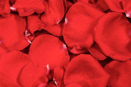 Photo pour Red rose petals background and testure, close up macro, high resolution 4. Nature romance background - image libre de droit