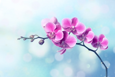 Orchid flowers on blurred blue background